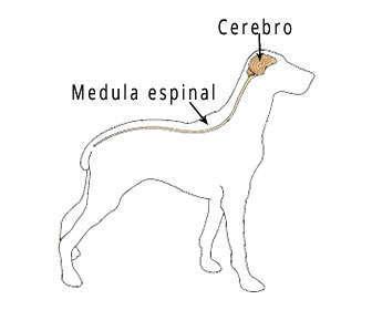 ataques epilepticos en perros causas