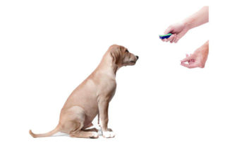 clicker para perros