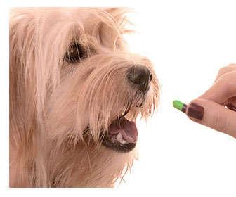 desparasitacion de perros interna