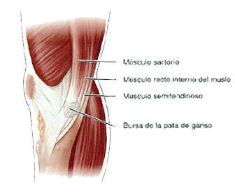 diferencias entre bursitis y tendinitis