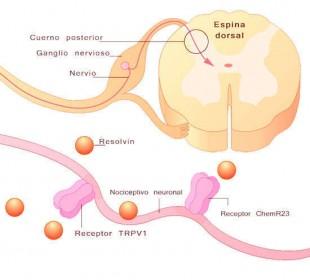 dolor neuropatico tratamiento
