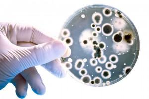 helicobacter pylori tratamiento