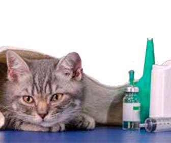 inmunodeficiencia felina tratamiento