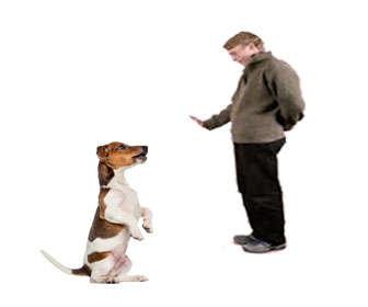 método o sistema clicker para perros
