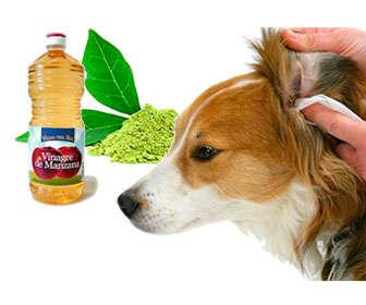 otitis en perros tratamiento casero y remedios