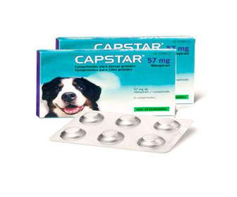 pastillas para pulgas perros