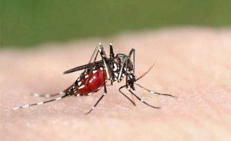 cuánto dura una picadura de mosquito tigre