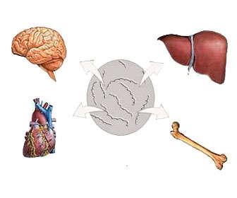 sifilis terciaria síntomas