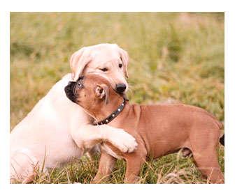 socializacion perro cachorro