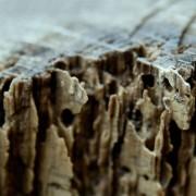 termitas tratamiento casero