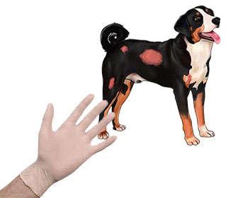 Como poner el tratamiento de sarna en perros