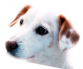 vacunas caninas recomendadas