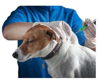 vacunas perros adultos
