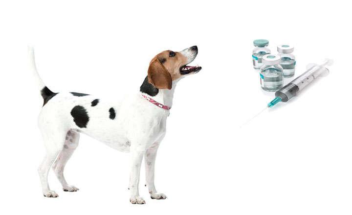 vacunas perros obligatorias